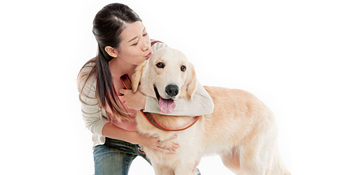affectionate dog
