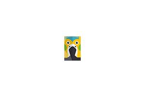 Wanted Timneh Grey Hen Bird