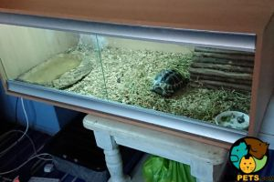 Tortoise For Sale in Lodon