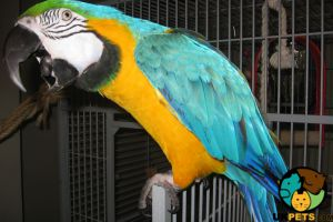 Macaw For Sale in the UK