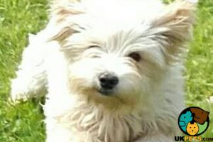Mixed Breed Online Listings