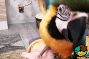 Macaw Online Listings