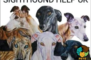 Greyhound For Sale in Great Britain