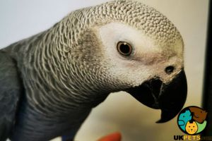 Available Parrots