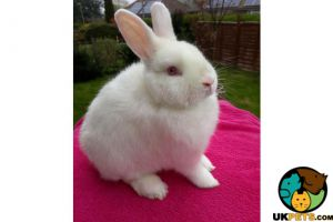 Other for Rehoming