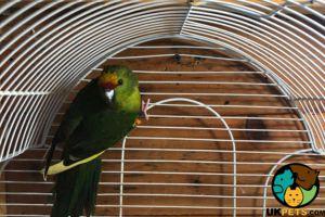 Parakeet Online Ad