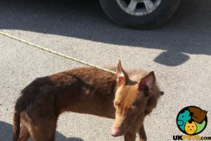 Greyhound For Sale in Lodon