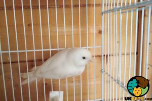 Canary for Rehoming