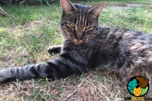 Tabby for Rehoming