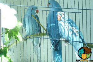 Parrots for Rehoming