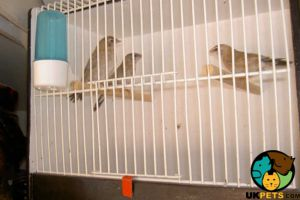 Finch Dogs Breed