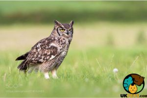 Birds of Prey for Rehoming