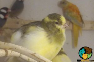 Canary Online Listings