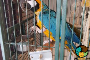 Macaw For Sale in Great Britain