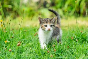 Mixed Breed for Rehoming